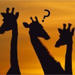 Será que as Girafas Lavam os Dentes?